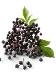 Elderberry Fruit Powder เอลเดอร์เบอร์รี่