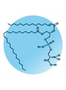 Phosphatidylserine 50% (Soy) สารสกัดจาก ถั่วเหลือง