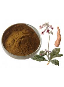 Rehmannia glutinosa extract สารสกัดจาก โกฐขี้แมว (เส็กตี่)