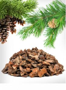Pine Bark Extract (Proanthocyanidins 85%)