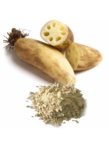 Lotus Root Powder (Freeze-dried, Pure)